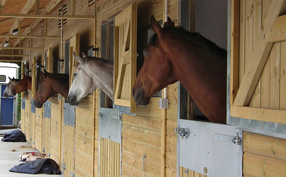 Timber Grand National Stable